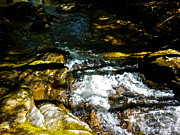 Dappled Light Photos - Childs Brook Half Light 4 by George Ramos