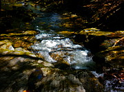Dappled Light Photos - Childs Brook Half Light 5 by George Ramos