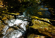 Dappled Light Photos - Childs Brook Half light by George Ramos
