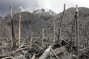 Bare Trees Posters - Chile. Forest Destroyed By Pyroclastic Poster by Richard Roscoe