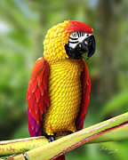 Bill Fleming - Chili Pepper Macaw