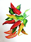 Hot Peppers Pastels Prints - Chillies From My Garden Print by Karin Best