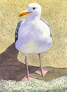 Seagull Paintings - Chilly by Catherine G McElroy