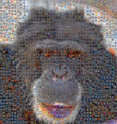 Boy Sees Hearts Digital Art - Chimp by Boy Sees Hearts