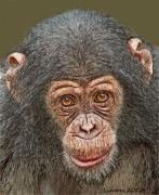 Colored Pencil Framed Prints - Chimp Portrait Framed Print by Larry Linton