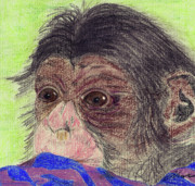 Chimpanzee Drawings Posters - Chimp With Blanket Poster by Julie L Hoddinott