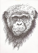 Cuddly Drawings Prints - Chimpanzee Print by Pat Barker