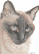 Cats Drawings Originals - Chin Shu by Lawrence Tripoli