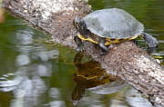 Yellow Slider Posters - Chin Up  Poster by Kathy Gibbons