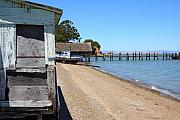 China Beach Prints - China Camp in Marin CA Print by Wingsdomain Art and Photography