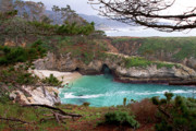 China Cove Prints - China Cove at Point Lobos Print by Charlene Mitchell