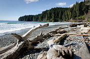Waves Photo Framed Prints - CHINA DRIFTWOOD china beach juan de fuca provincial park BC Framed Print by Andy Smy