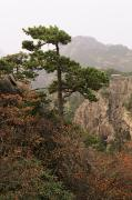 Overcast Day Posters - China, Mt. Huangshan Poster by Larry Dale Gordon - Printscapes