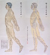 Bsloc Metal Prints - Chinese Chart Of Acupuncture Points Metal Print by Everett