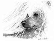 Graphite Drawings Posters - Chinese Crested dog Poster by Monika Stattner
