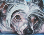 Chinese Portrait Framed Prints - Chinese Crested portrait Framed Print by Lee Ann Shepard