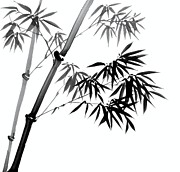 Branch Drawings Posters - Chinese Ink Painting of Bamboo Poster by Evelyn Sichrovsky