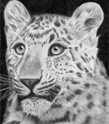 Panther Drawings - Chinese Panther by Carl Moore