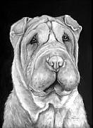 Old Master Painting Framed Prints - Chinese Sharpei Framed Print by Enzie Shahmiri