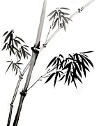 Branch Drawings Posters - Chinese Stye Bamboo Painting Poster by Evelyn Sichrovsky