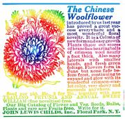 Woodcuts Digital Art - Chinese Woolflower by Eric Edelman