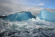 Icebergs Art - Chinstrap Penguins Rest Atop A Blue by Maria Stenzel