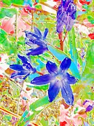 Early Mixed Media Prints - Chionodoxa Print by Barbara Moignard