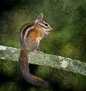 Chipmunk In The Forest Print by Betty LaRue