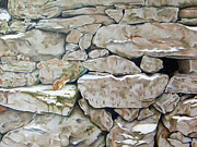Stonewall Originals - Chipmunk on a Stonewall by Tina McCurdy