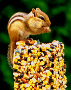 Nuts Mixed Media - Chipmunk Take Out by Ms Judi