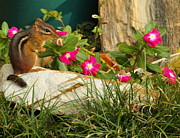Impatiens Flowers Photos - Chipper Chipmunk by Andrew McInnes