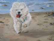 Havanese Paintings - Chipper by Kellie Straw