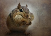 Cute Chipmunk Prints - Chipster Print by Lori Deiter