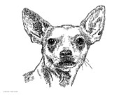 Clip Drawings Prints - Chiwawa-Portrait-Drawing Print by Gordon Punt