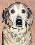 Mutt Drawings - Chloe by Ana Tirolese