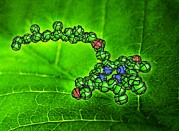 Molecule Art - Chlorophyll Molecule, Artwork by Equinox Graphics
