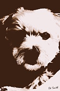 Maltese Puppy Prints - Chocolate Charlie Print by Ed Smith