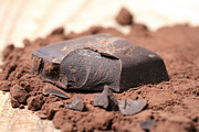 Chocolate Prints - Chocolate Print by Frank Tschakert