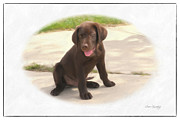 Lab Puppy Posters - Chocolate Lab Puppy Poster by Susan  Lipschutz