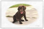 Chocolate Lab Puppy Print by Susan  Lipschutz