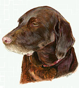 Chocolate Lab Drawings - Chocolate Labrador by Deb Gardner