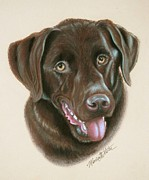 Retriever Pastels Posters - Chocolate Labrador Poster by Monica  Webster