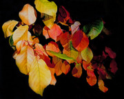 Fall Photos Prints - Chokecherry Leaves Print by Terril Heilman