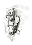 Friesian Prints - Chomping at Bit - sketch1 Print by Shirley Heyn