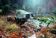 Stafford Posters - Chopawamsic Creek Misty Autumn Day Poster by Thomas R Fletcher