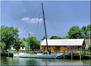 Denton Prints - Choptank River Print by Brian Wallace