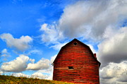 Country Scene Photos - Chosen One by Emily Stauring