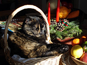 Banquet Prints - Christmas Cat Basket Print by Laura Tasheiko