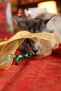 Christmas Cat Print by Jody Van Slembrouck