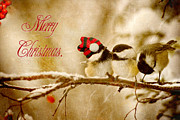 Kelly Nelson - Christmas Chickadees.